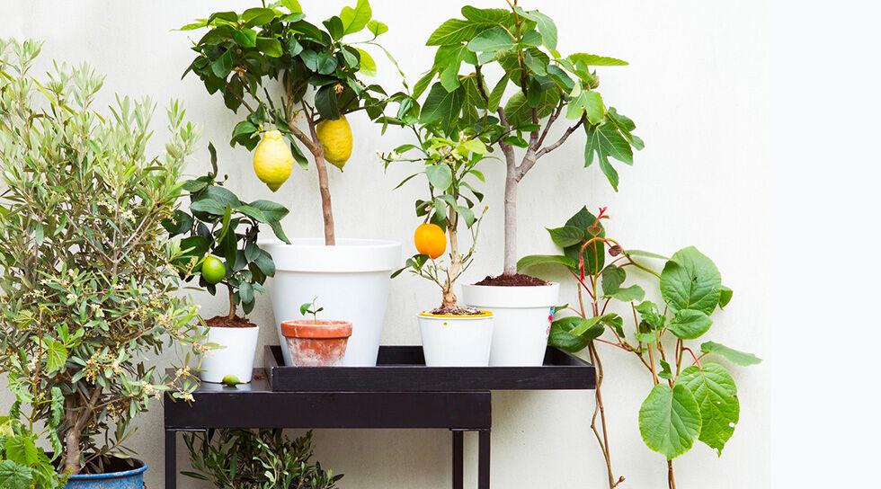 PERFECT PLANT en promo chez BAZARCHIC